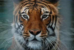 Negativity Bias & The Tiger in the Bushes